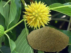 bali-kratom-powder